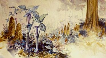 'Cypress Spring'